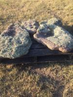 Four pieces of various sizes of flat Moss Rock