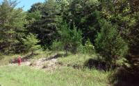 15 Acres± Of Mostly Woods In Lawrence County, AL