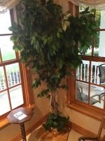 Faux Ficus Tree with planter