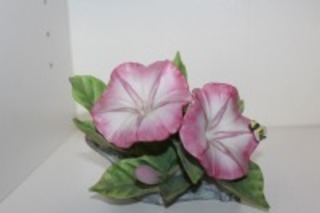 PINK MORNING GLORY WITH B BY ANDREA