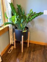"Large plant in planter - plant and stand measure 55"" tall - be prepared to bring a two wheeled dolly for moving!"