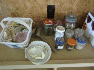 Sea shells and sand collection