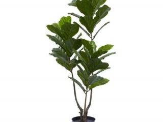 "NEARLY NATURAL 65"" FIDDLE LEAF TREE"