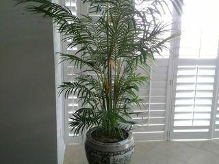 Large porcelain planter pot