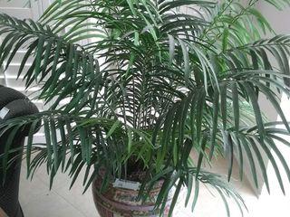 Porcelain planter pot