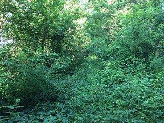 Natural Habitat for Wildlife Listing