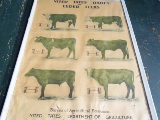 NEAT OLD CATTLE GRADING POSTER SALE BARN