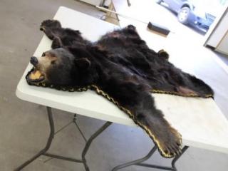 Ontario Black Bear skin rug