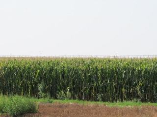 160 +/- ACRES IRRIGATED CROP * STAFFORD COUNTY KS