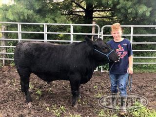 Evan-Schulte--Market-Beef--Steer-_1.jpg