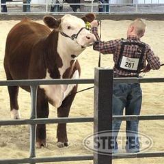 Isaac-Shinn--Market-Beef--Steer-_1.jpg