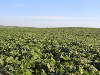 157.49 +/- Acres - Pierce County, ND