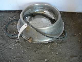 Electric Dog Dish
