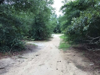 84+ acres and a Hunter's Paradise with a cabin!
