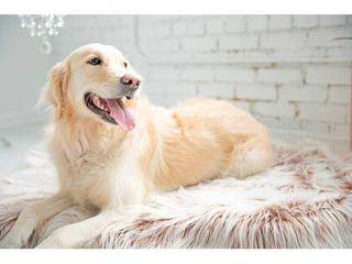 Snoozzy Glam Pet Orthopedic Rug Dog Bed   36 X 24
