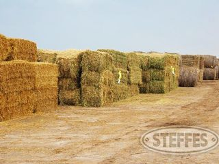 Post on Backside for ONLINE hay.JPG