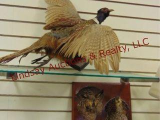 2 bird displays