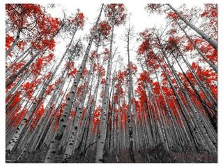 Designart  Red leaf Trees in Tall Forest  Floral landscapes Photographic on wrapped Canvas   Red  Retail 133 99