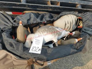 Speckled Belly decoys-14 in bag