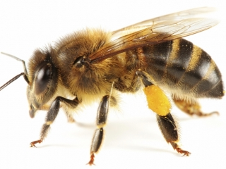 ANNUAL BRANDON LIVE BEE ONLINE ONLY TIMED AUCTION
