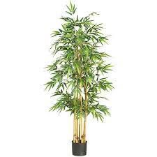 Bamboo Silk Tree  Retail 114 99