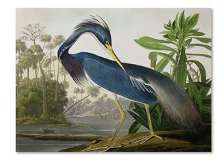 The Curated Nomad John James Audubon  louisiana Heron  Canvas Art  Retail 134 99