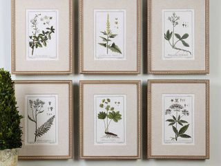 Uttermost Floral Botanical Set Of 6 Art Prints  Size One Size   Brown