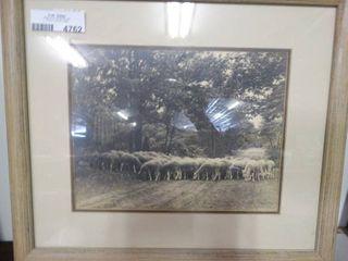 Framed Photo of Sheep Flock