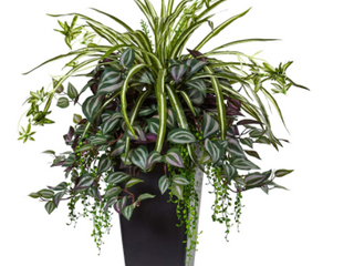 Nearly Natural Wandering Jew and Spider Plant in Black Planter Retail 99 49