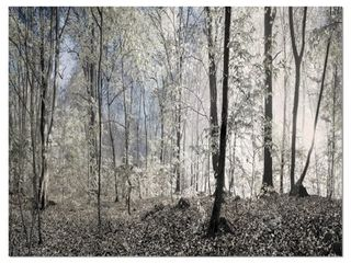 Designart  Dark Morning in Forest Panorama  landscape large Canvas Art Print   Multi color