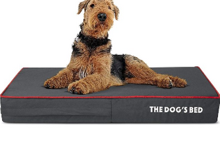 The Dogs Bed   large  Orthopedic Model