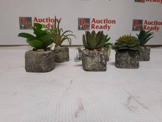 Succulent In Stone Pot Set of 6