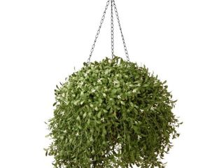 Argentea Hanging Basket  Retail 85 99
