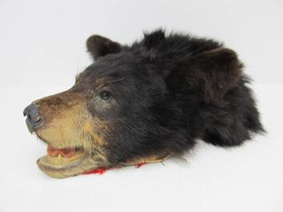 Genuine Taxidermy Black Bear Head Wall Hanging