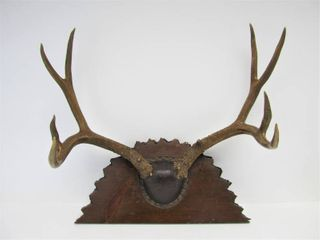 Nice Large Mounted Antler Rack