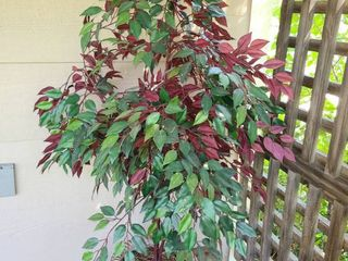 Faux Tree 52 in Tall in Pot 11 in Diameter