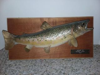 Mounted Fish Caught 1971 Plaque Wood 9 x 18 in