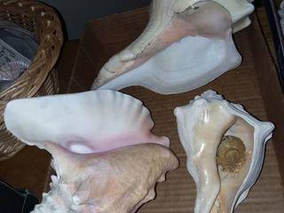 Assorted Seashells lG
