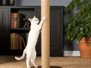 Prevue Pet Products 7100 Kitty Power Paws Tall Round Cat Scratching Post - Cat not included