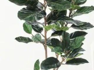 """Potted Audrey Ficus Plant 46"""""""