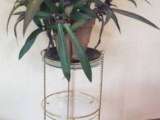 Brass Plant Stand  25 5 in  tall  and live Potted Plant