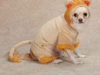 Casual Canine Jungle King Dog Costume  large  Orange