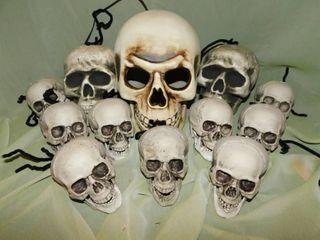 A Dozen Skulls  12 ea
