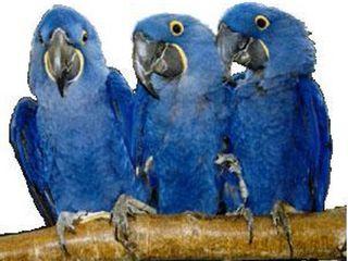Polly's Full Length Hardwood Bird Perch, 30-Inch