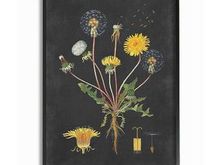 5  similar Stupell Industries Botanical Drawing Dandelion On Black Design Framed Wall Art  Proudly Made in USA