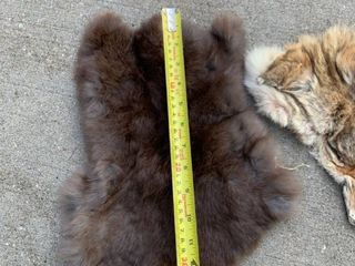 Fox and Unknown Fur Pelts