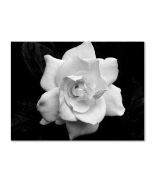 Kurt Shaffer 'Gardenia in Black and White' Canvas Art- Retail:$122.10