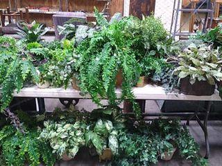Assorted Plant Decor.