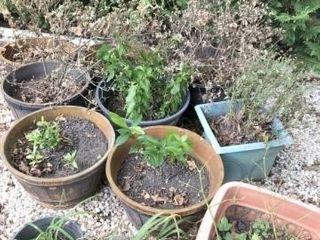 Assorted Outdoor Flower Pots
