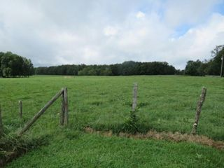 28.37 Acre Farm & House in Tracts - Absolute Live/Online Only Auction